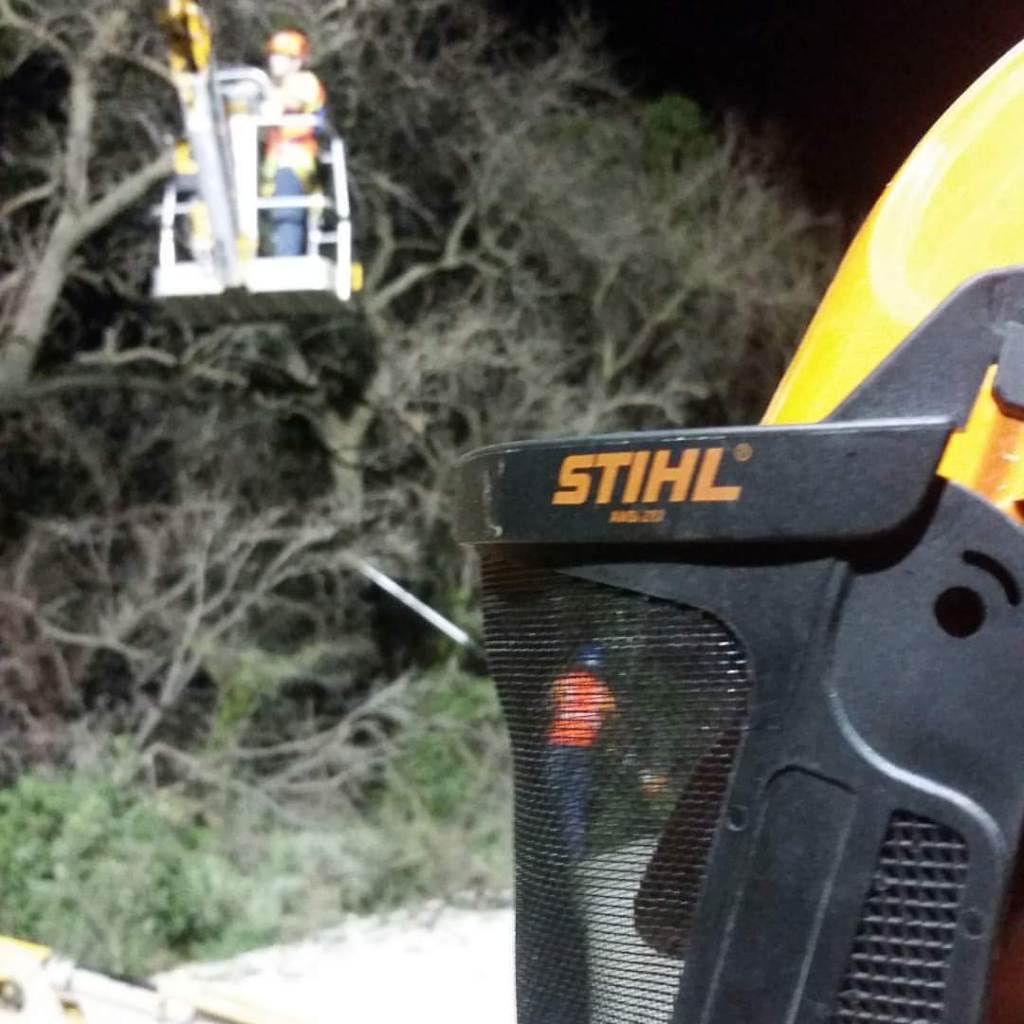 Tree Trimming By Wichita Tree Service employees