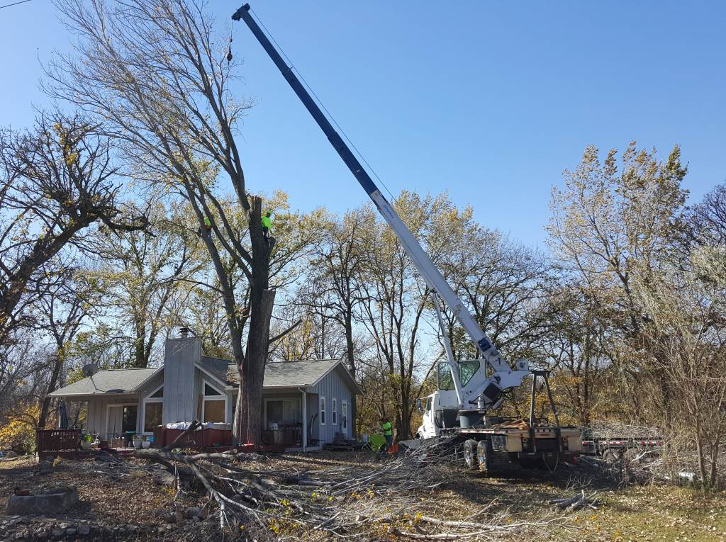 crane tree removal by wichita tree service