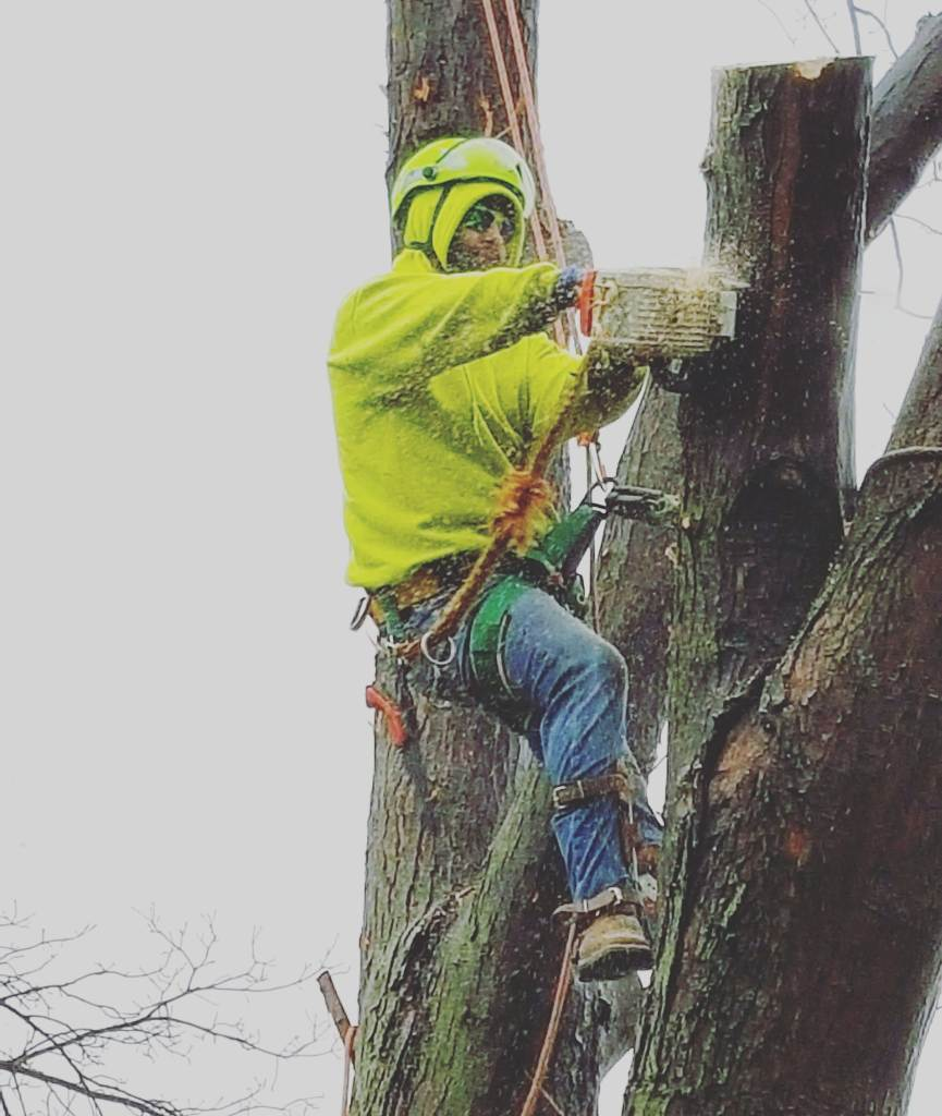 Tree Trimming done is winter by Wichita Tree Service owner Robert Phillips