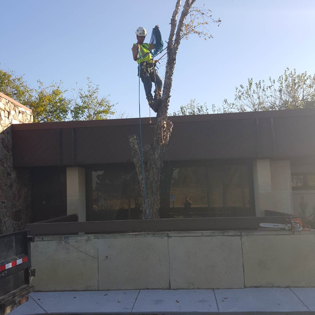 tree removal and stump grinding by Wichita Tree Service employee.