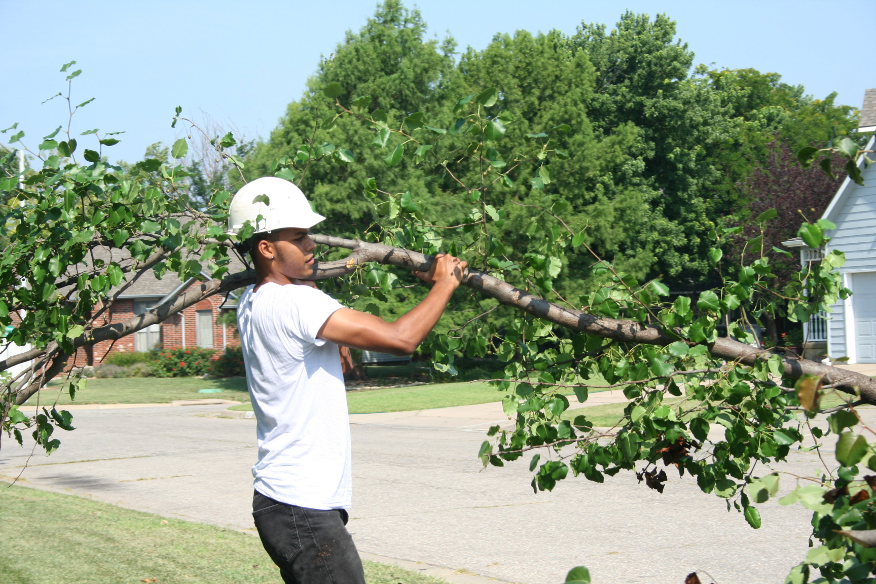 Tree Trimming job in Wichita Kansas done by Wichita Tree Service