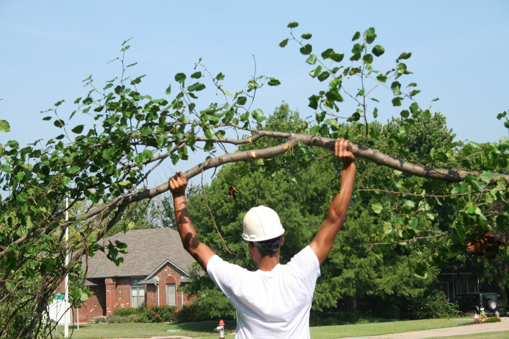 Wichita Tree Service tree service wichita ks