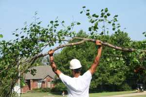 a tree service edited