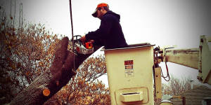 wichita tree service tree trimming