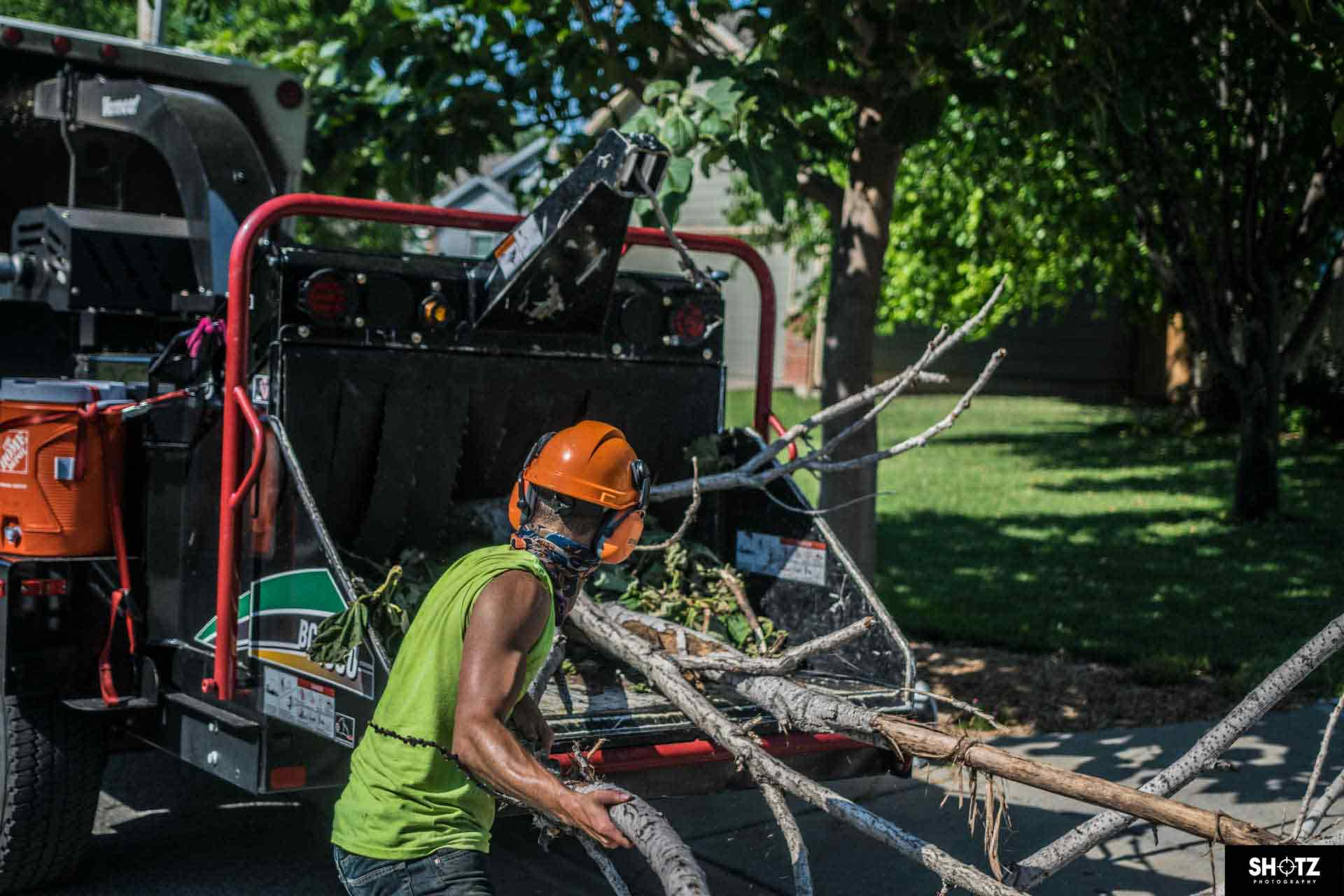 Wichita Tree Service LLC (316)616-8321